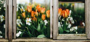 flowers-through-window-allergies