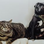 Cat and dog sitting next to each other on blankets.