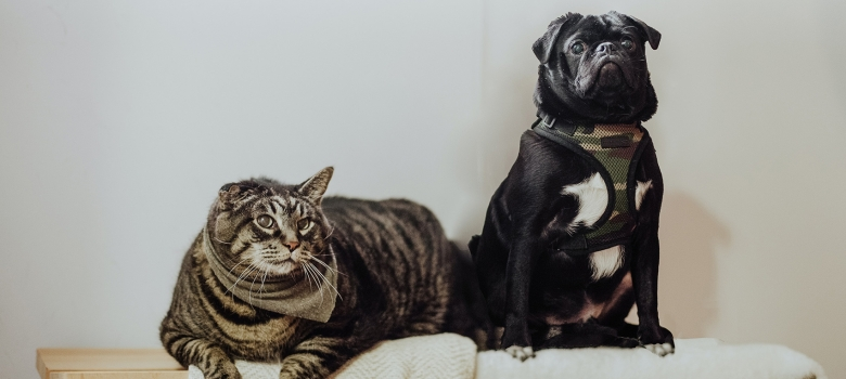 Pet Allergies: Symptoms and Prevention